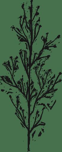 Painted Vegetation