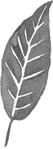 Painted Ash Leaf