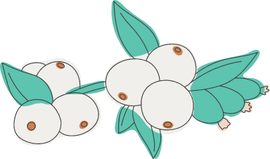 White Snowberries