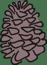 Conifer Pinecone
