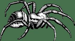 Tarantula Side