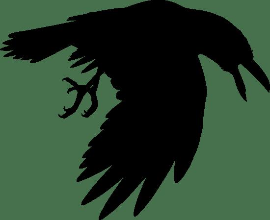 Preying Raven