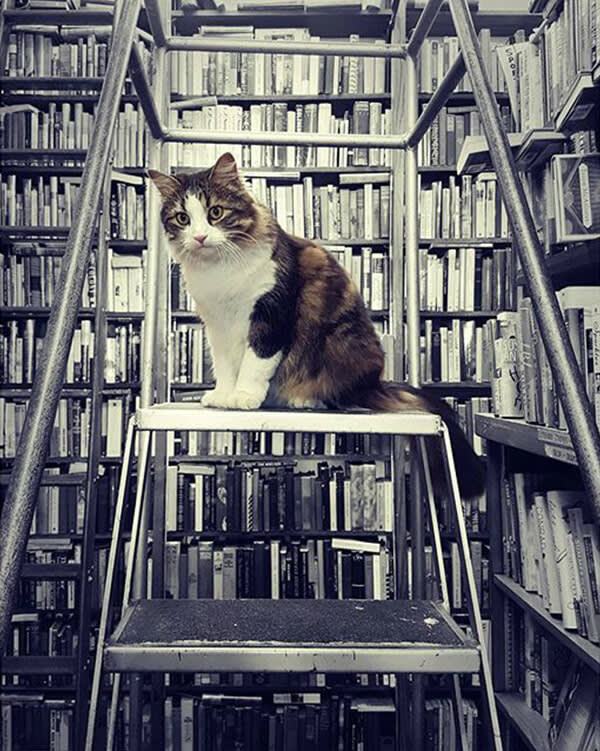 This black and white picture of a cat in a bookstore gets kicked up a notch with a color pop.