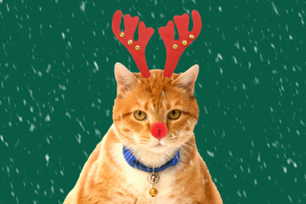 A grumpy cat with reindeer antlers and a Rudolph nose, courtesy of our Santa costume effects.