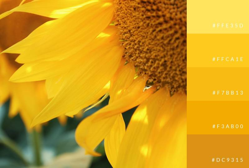 color-palette-yellows