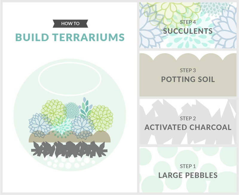 Teach others how to make a terrarium with a collage.