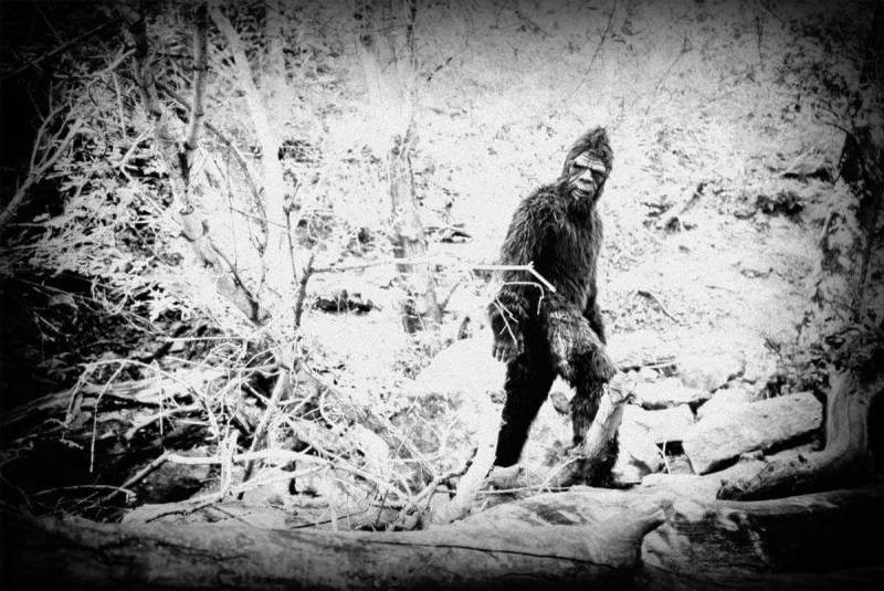 Black and white filters: Spotting Bigfoot. Holga (Blur 0%, Grain 90%, Fade 25%); Infrared. Apply saved custom effect and repeat.