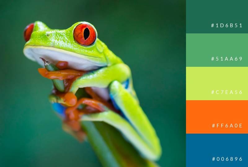 color-palette-tree-frog