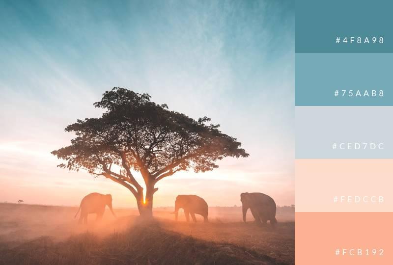 color-palette-elephant-sunset