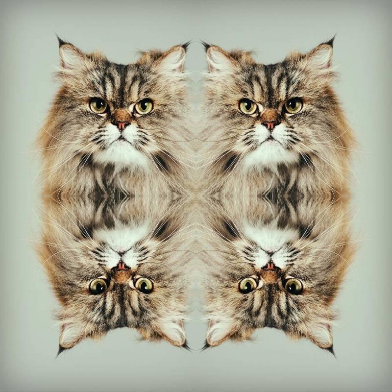 efecto-espejo-gato-enojado