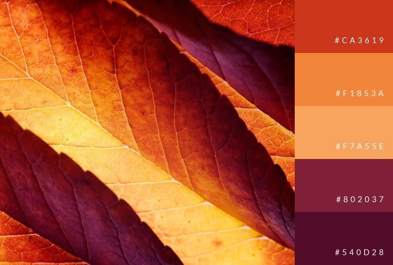 color-palette-seasonal-fall