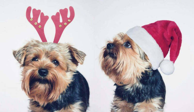 Pictured: PicMonkey users double your Yorkie, double your fun.