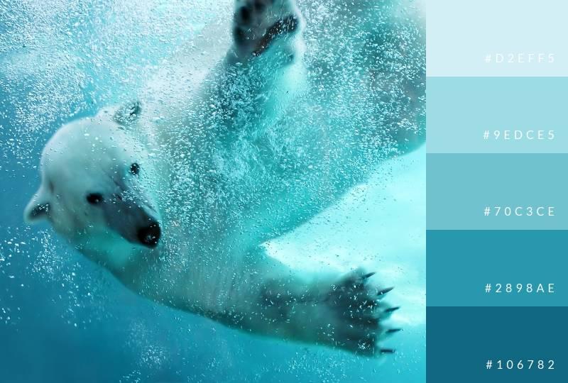 color-palette-polar-bear-blues