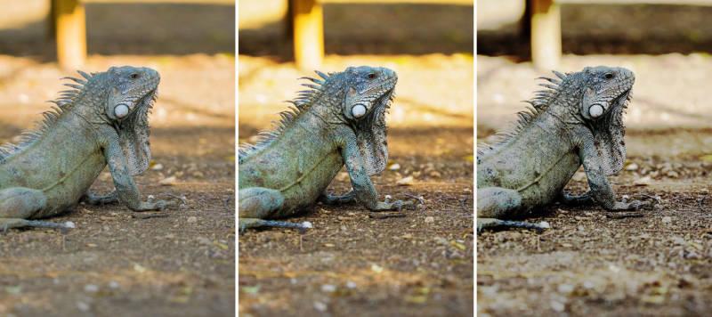 Lizard Compare