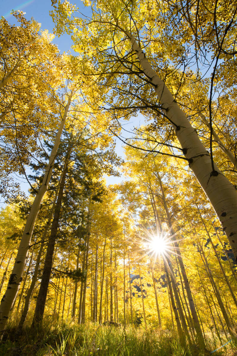 Fall photography tips: use nature as its own photo effect, as in this shot of trees in the Rocky Mountains, Colorado.