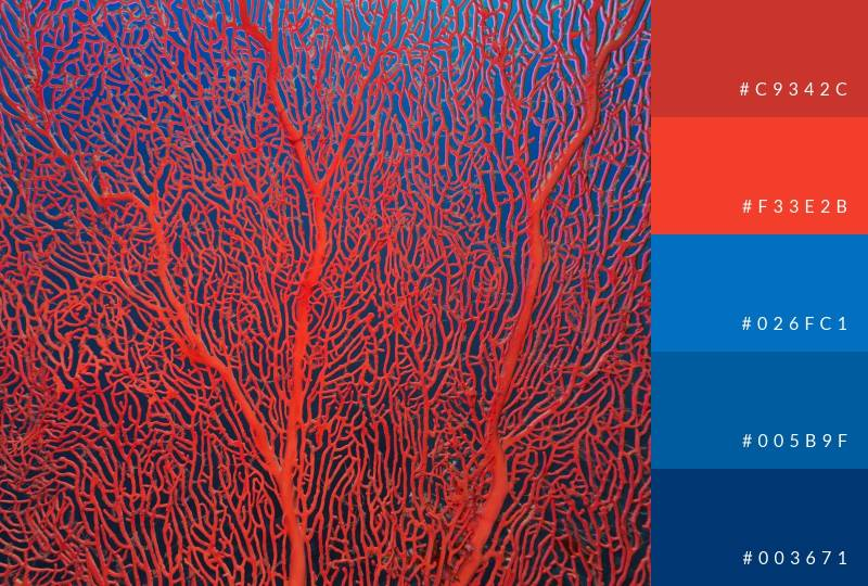 color-palette-coral-reds-and-blues