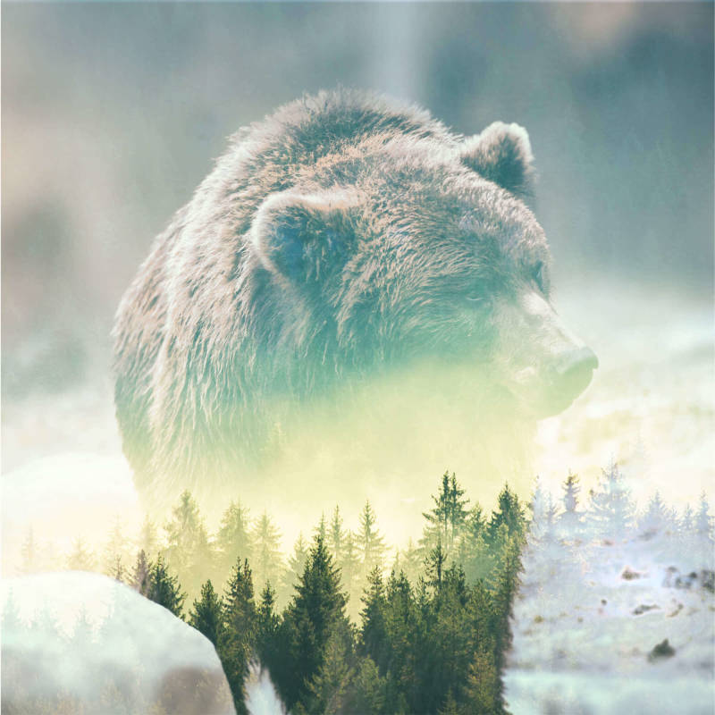 Double exposure image with a bear and trees