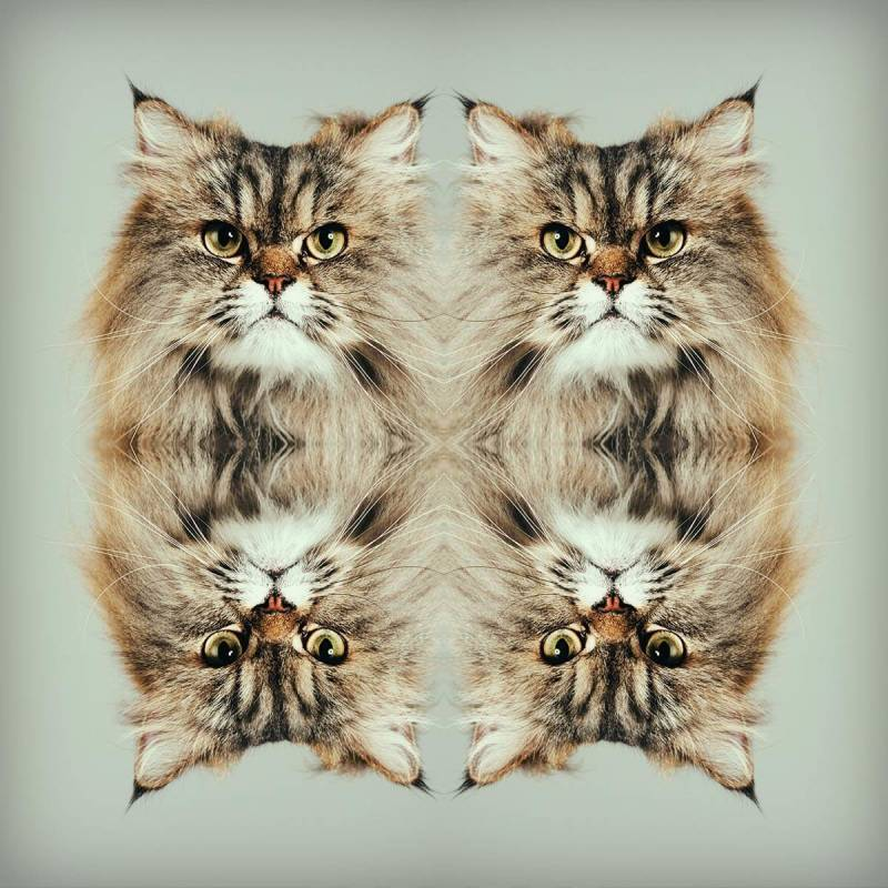 mirror-effect-angry-cat