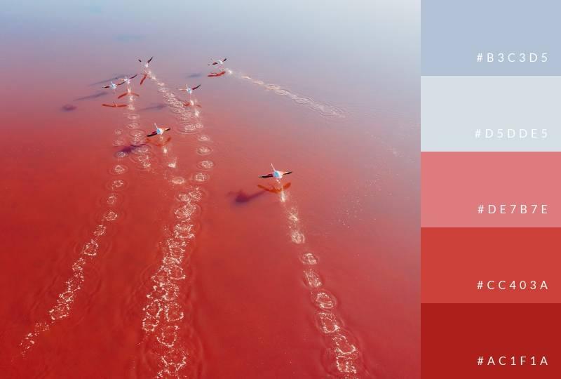 color-palette-soaring-reds-soft-blues