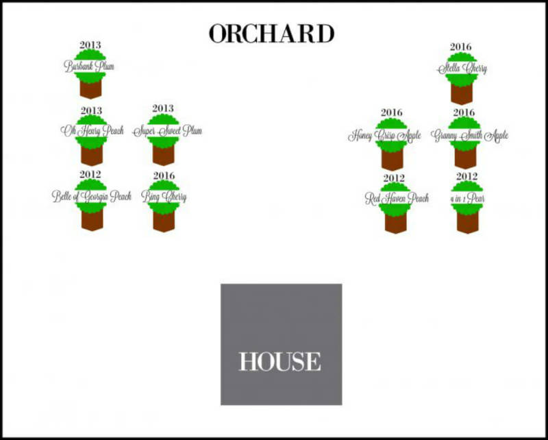 An orchard layout map created by PicMonkeyer Dawn Cain.
