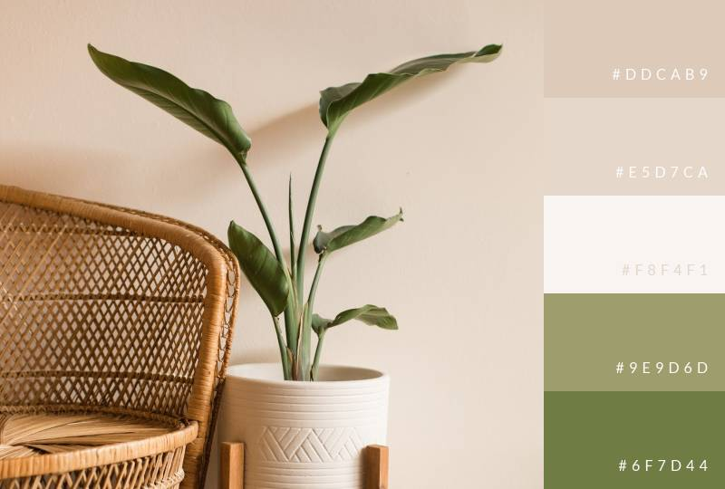color-palette-soft-leaves