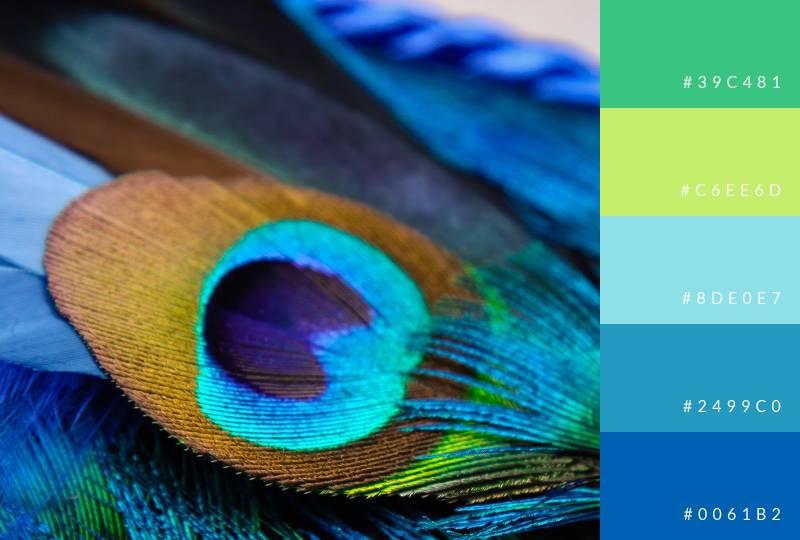 color-palette-peacock