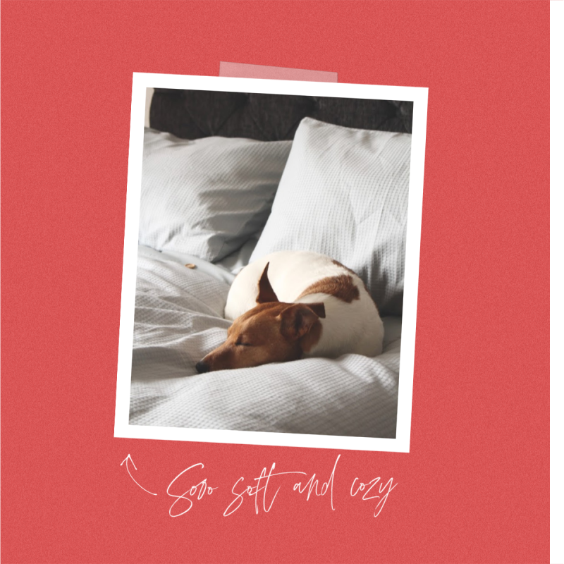 Soft & Cozy Facebook Post Template