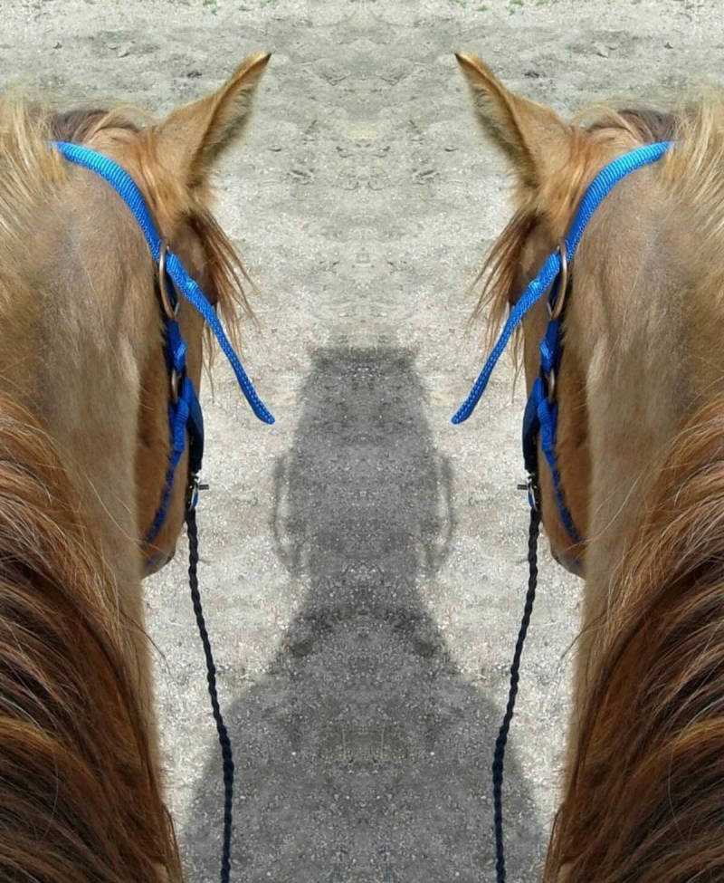 A PicMonkey user demonstrates our new Mirror effect by creating the illusion of two brown horses casting one shadow.