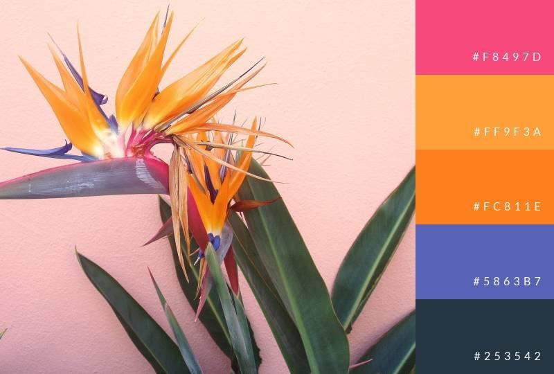 color-palette-birds-of-paradise