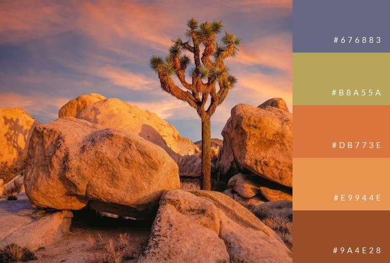 color-palette-joshua-tree