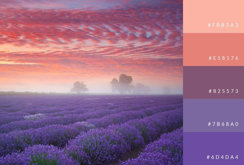 color-palette-lavender-fields
