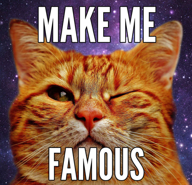 Learn to make a meme (like this cat in outer space) in minutes with PicMonkey's tools.