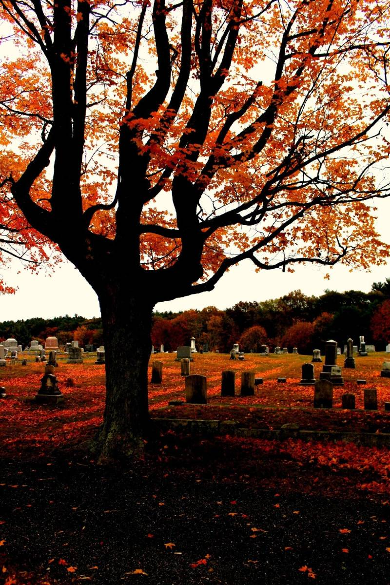 A spooky user photo from this month's #Fave roundup.