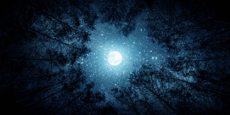 blue moon in the night sky with trees around