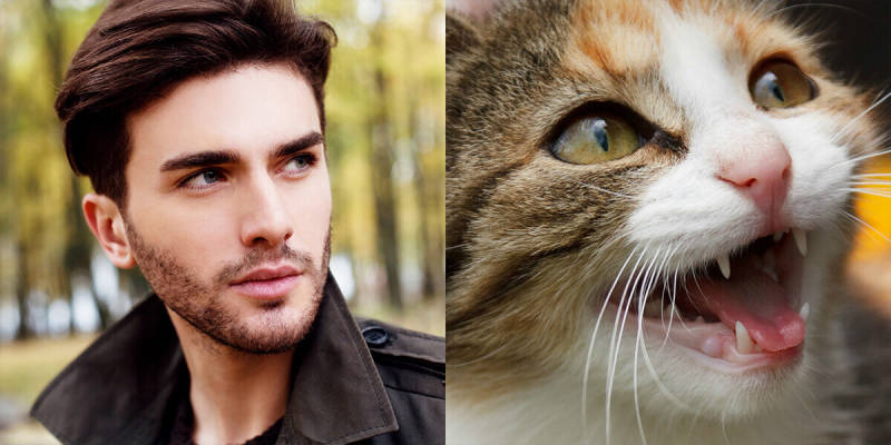 Side-by-side comparison memes make use of two images with similarities, like this man and this cat.