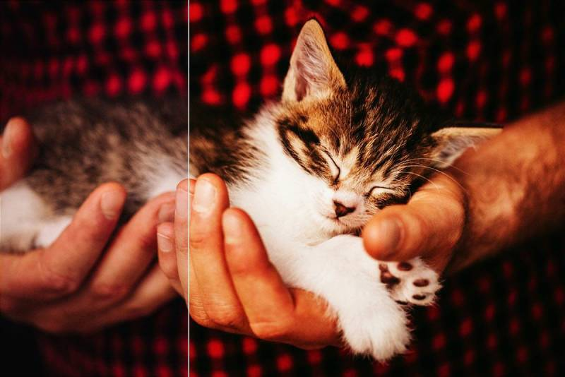 Photo of a man holding a sleeping kitten, with PicMonkey's Film Stock photo filter applied.