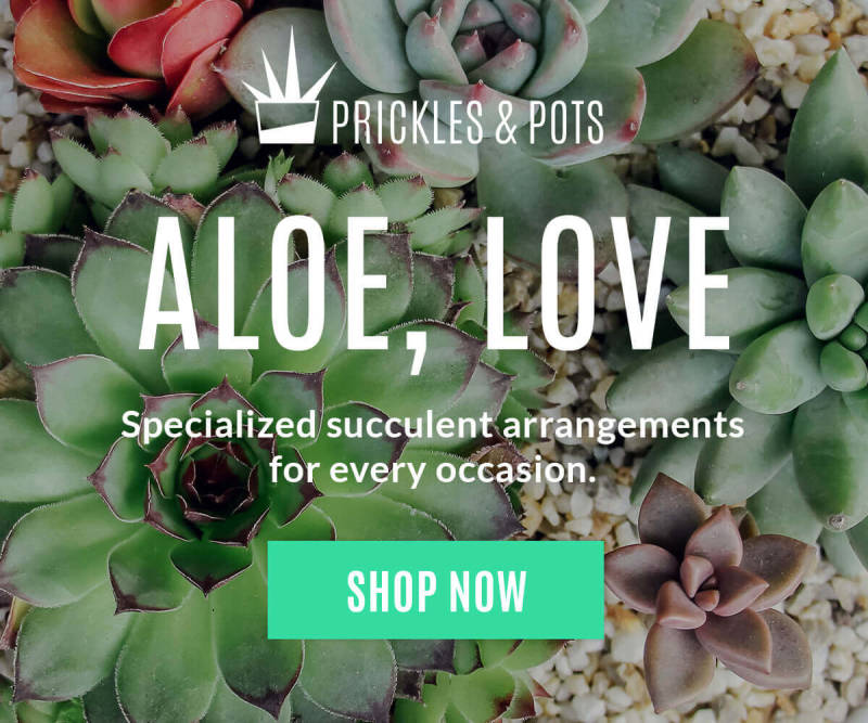 Add text to an image and create a beautiful promotional image for your business. This one if for a fake succulent company.