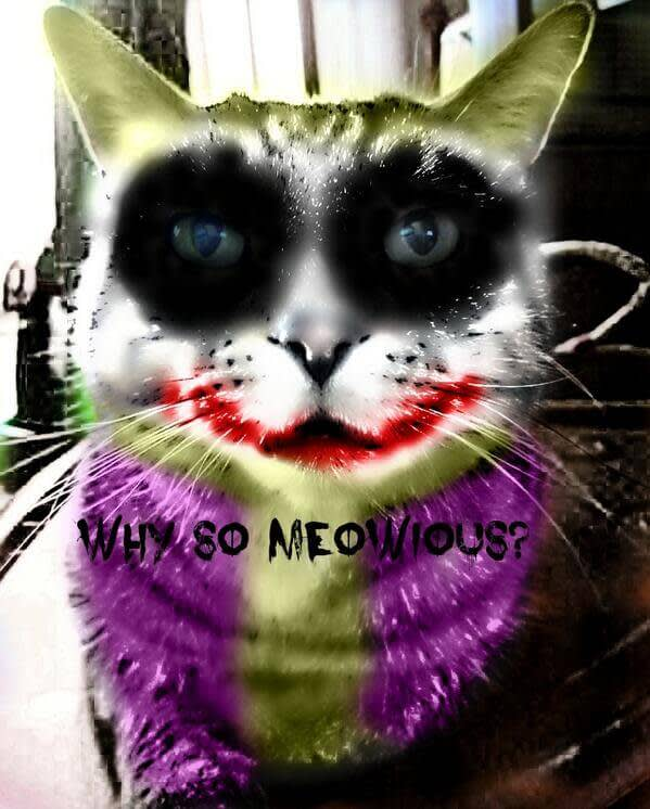 Halloween photo effects: Honorable Mention - photo of cat made into The Joker (Funny).