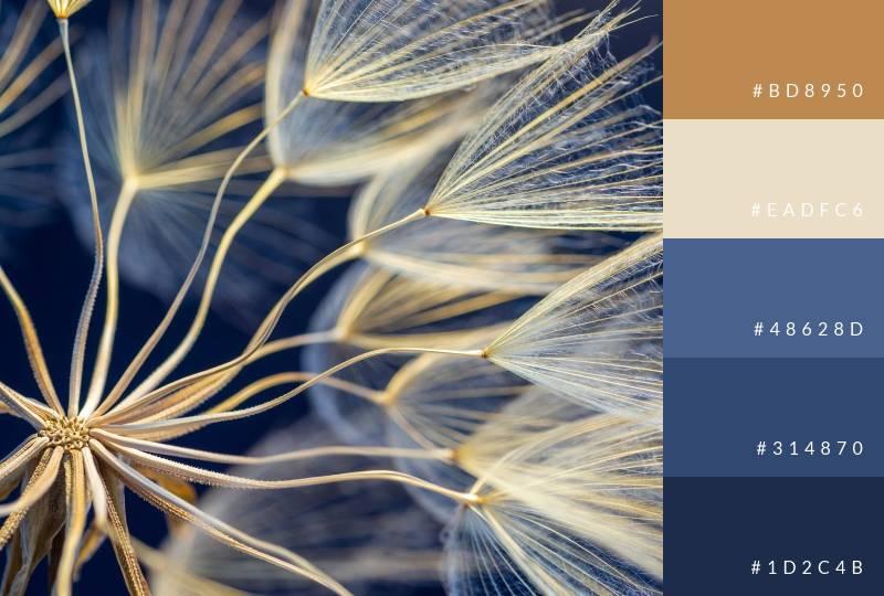 color-palette-cool-dandelion