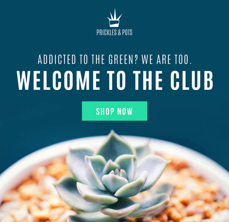 This email hero image for a succulent company was created with PicMonkey.