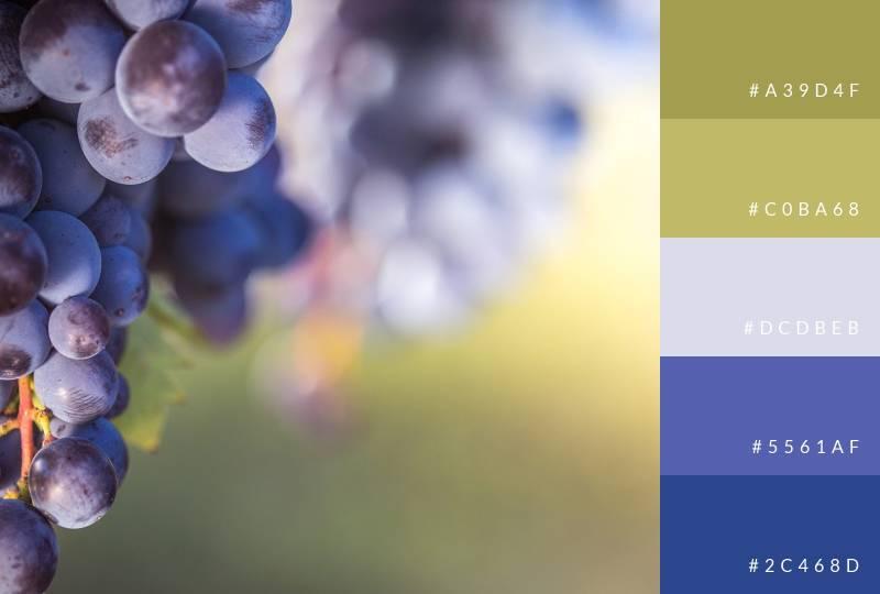 color-palette-grapevine