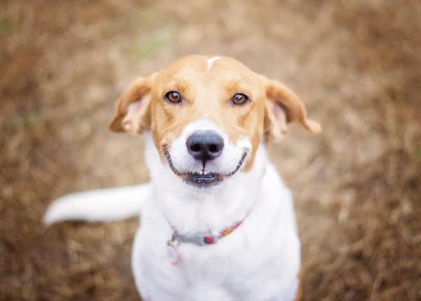 Asset - Smile Dog