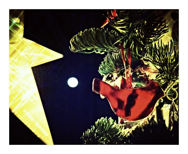 Star, Chrismas tree branches, red cardinal ornament, and moon, for our holiday photo contest.