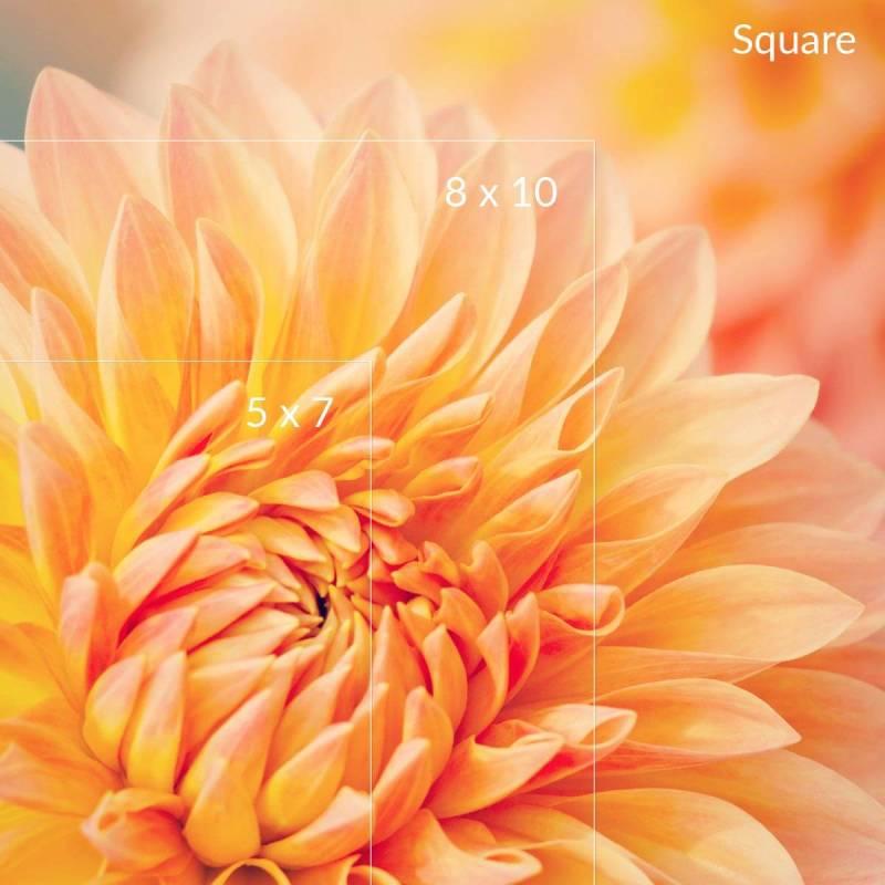 crop-print-sizes-over-flower