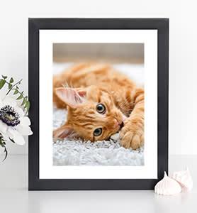 Print shop Framed prints