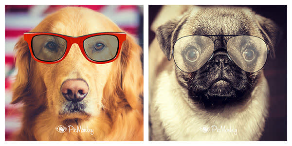 Sheesh, dogs need sunglasses too! Throw 'em on in your next photo editing sesh even if you can't in real life.