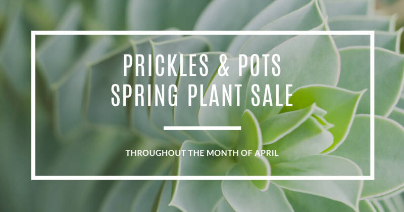 PicMonkey's templates make it easy to create ads and promotional images for your brand. This one is for a fake succulent company.