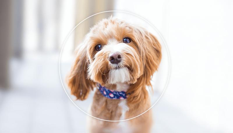 El desenfoque focal de la foto pone el foco de atención donde lo desee en las fotos