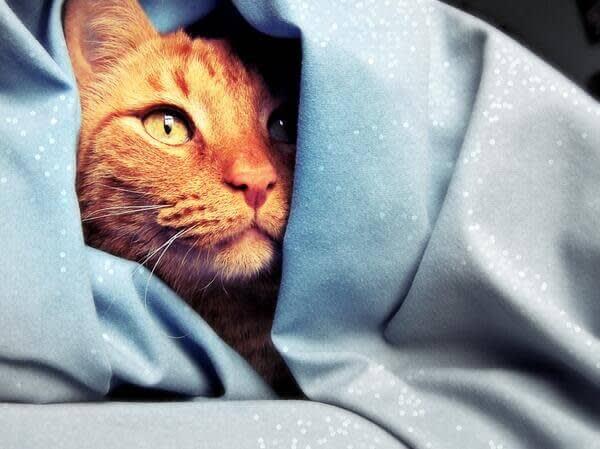 Medium closeup of cat nestled in blankets, plus bokeh effect.