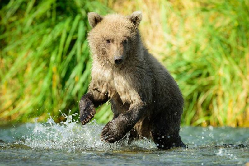 A grizzly cub that looks just like a teddy bear, except with deadly claws.